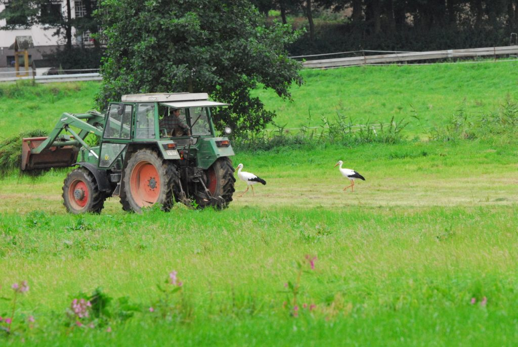paar-nahrungssuche-traktor