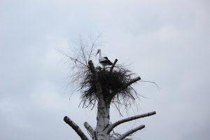 Baumbrut im Schwalm-Eder-Kreis