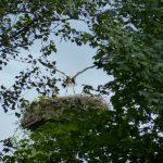 ederaue-flugtraining2013-07-03_10