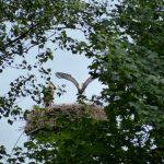 ederaue-flugtraining2013-07-03_17