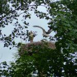ederaue-flugtraining2013-07-03_24