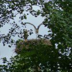 ederaue-flugtraining2013-07-03_25