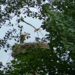 ederaue-flugtraining2013-07-03_26