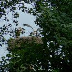 ederaue-flugtraining2013-07-03_28