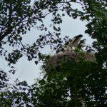ederaue-flugtraining2013-07-03_30