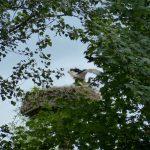 ederaue-flugtraining2013-07-03_5
