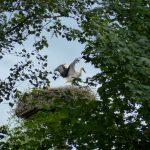 ederaue-flugtraining2013-07-03_7