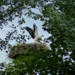 ederaue-flugtraining2013-07-03_8