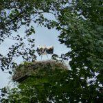 ederaue-flugtraining2013-07-03_9