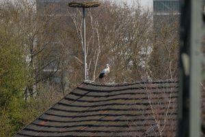 auch vom Dach