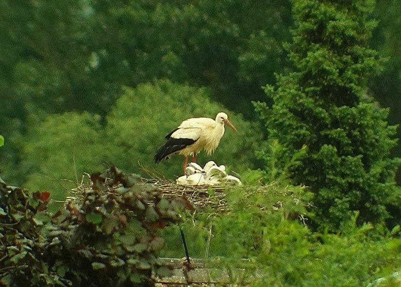 Unruhe im Nest
