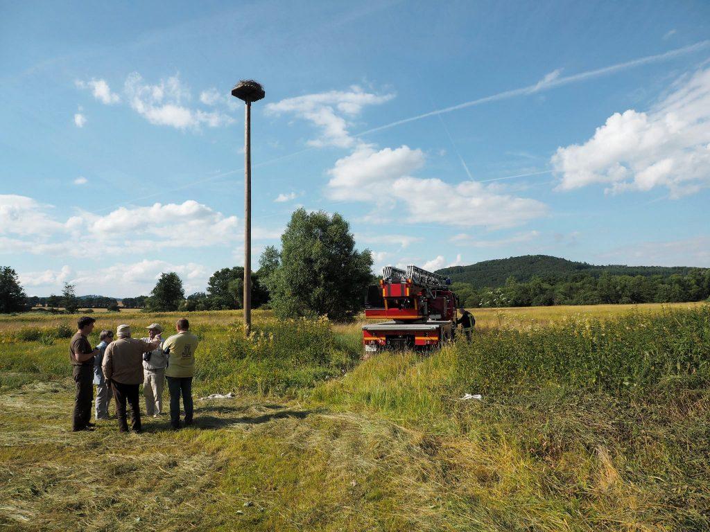 Der Horst bei Allendorf/Landsburg in der Schwalmaue