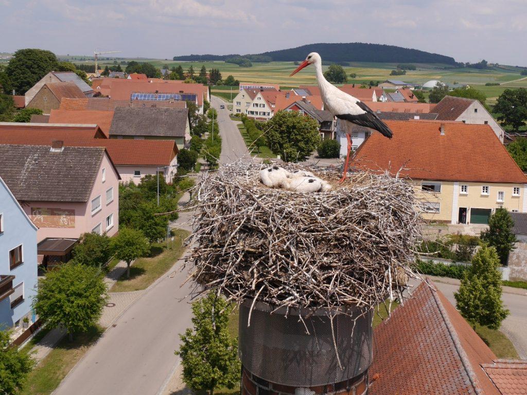 trommetsheim_beringung-2018